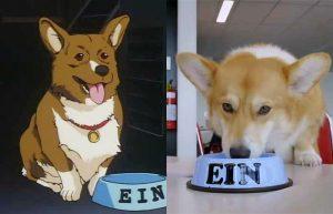 Cowboy Bebop, il live action Netflix: un cane di razza corgi entra nel cast
